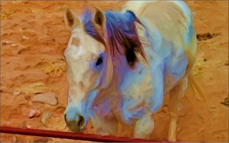 He can see me - oil paint, horse, enhanced, barnyard