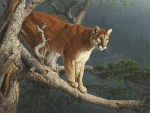 'Wild and beautiful'.....