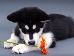 Denzel and Flower