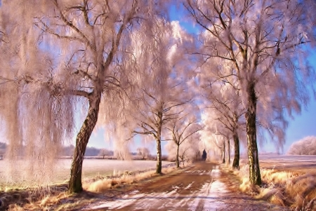 Pink Winter - nature, road, trees, winter, rural, charm, photography, snow, beauty, scenery, landscape, gorgeous