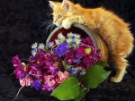 Kitten Love Flowers