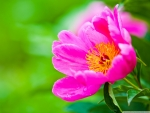 Awesome pink flower