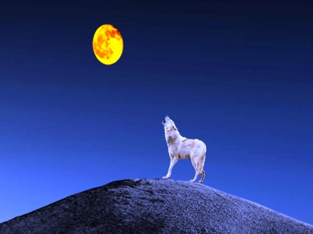 The Lone Wolf - Wolf Howl, Moon, Wolf, Night