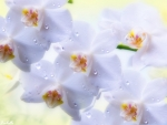 Orchids ♥