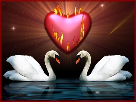 fiery Love - swan, romance, swans, fiery, romantic, heart, love