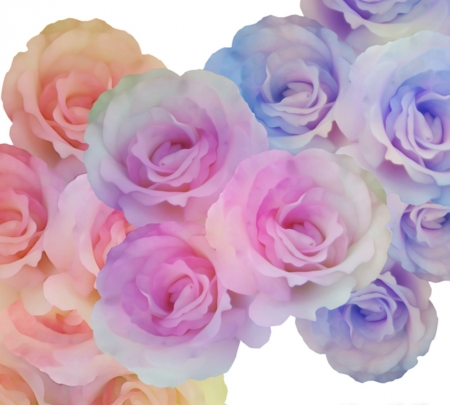 Rainbow Roses - pretty, orange, yellow, beautiful, soft, rainbow, roses, sweet, cute, purple, flowers, nature, white, pink, blue