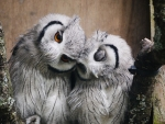 Cute Couple of Owls