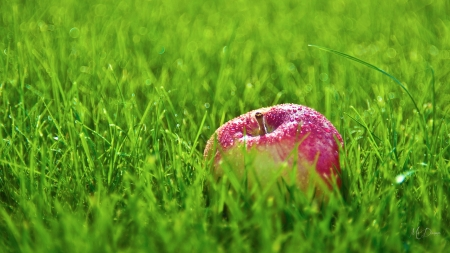 Fallen Apple - grass, Firefox Persona theme, green, fruit, summer, fresh, health, apple