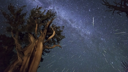 meteor shower over trees - stars, meteors, trees, night