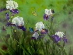 Butterflies in the Iris