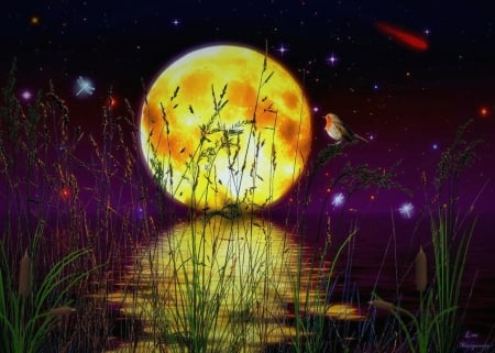 Reflection of The Moon Light - stars, cattails, yellow, pond, fantasy, moon, water, digital, evening, reflection