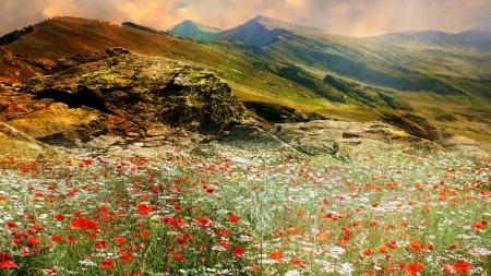 The hills are alive flowers nature background - A live nature wallpaper ...