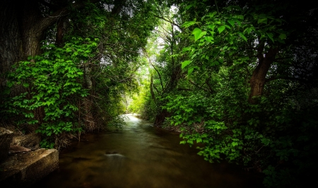 forest river - forest, water, woods, river, lake