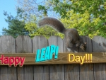 Happy Leap Day Squirrel!!! :D
