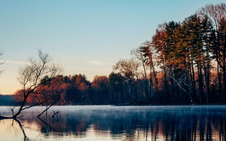 Morning Mist - water, trees, autumn, reflection