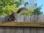 A Leaping Squirrel