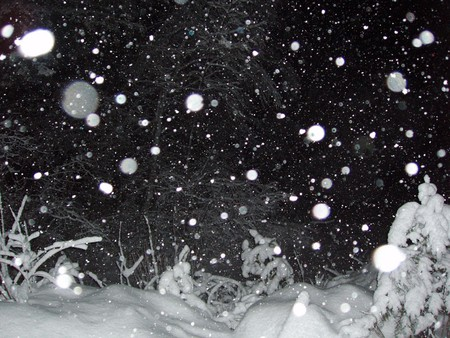 Snowfall At Night Winter Nature Background Wallpapers On