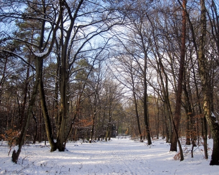In the forest - forest, naturephotography, woods, nature, winter