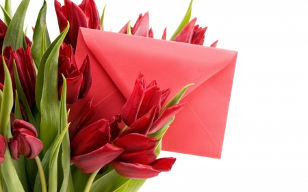 Happy Women's Day! - red, woman, card, green, bouquet, flower, day, white, tulip, letter