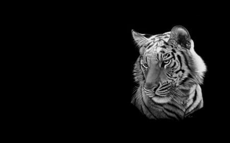 Tiger Other Abstract Background Wallpapers On Desktop Nexus