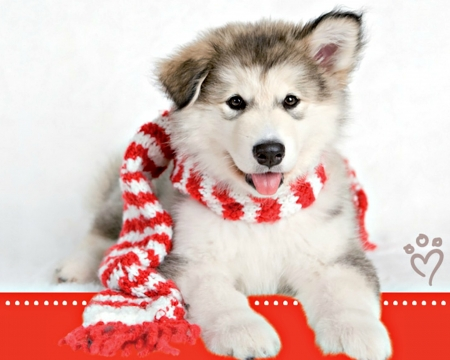 Christmas puppy , Dogs \u0026 Animals Background Wallpapers on