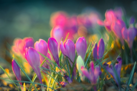 Spring Flowers - bokeh, flowers, purple flowers, nature, spring