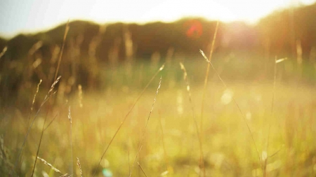 Nature - grass, field, nature, sunlight