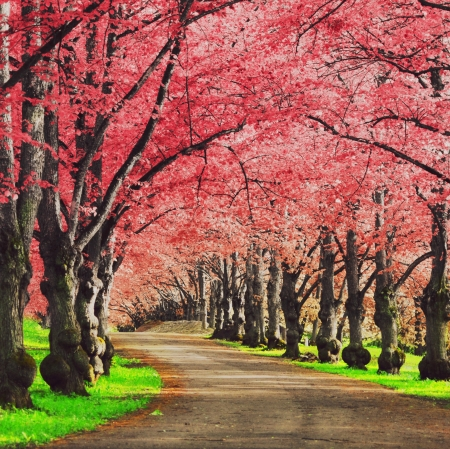 Pink Pathway