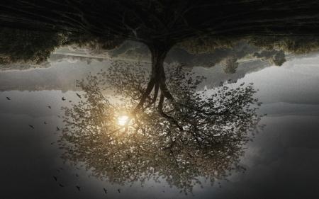 The Divergent Series Insurgent 2015 Movies Entertainment Background Wallpapers On Desktop Nexus Image 2095223