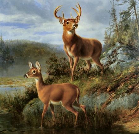 5 Conservation Organizations That Help Deer Hunting | Deer ... |Wide Deer Wildlife