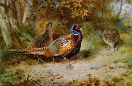 Autumn Covert - Pheasant F - art, old master, autumn, pheasant, beautiful, artwork, bird, avian, painting, wide screen, Thorburn, scenery, oldmaster, landscape, Archibald Thorburn