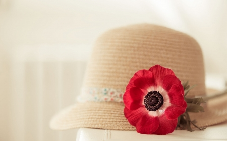 87ba4eaa21f Hat and flower - Photography   Abstract Background Wallpapers on ...