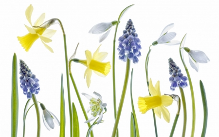 Spring flowers - snowdrop, green, daffodils, texture, yellow, white, blue, card