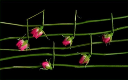 ~~Note Of The Flower~~ - flower, note, nature, music