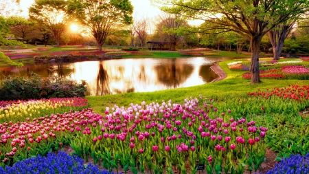 Tulips garden - colorful, grass, sunlight, beautiful, spring, park, freshness, pond, alleys, rays, flowers, garden, tulips, reflection