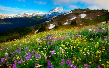 Mountain wildflowers - hills, pretty, lovely, grass, beautiful, spring, carpet, sky, freshness, valley, mountain, wildflowers, slope, landscape, meadow