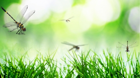 Dragonflies and Fresh Grass - grass, bokeh, green, spring, summer, fresh, dragonflies