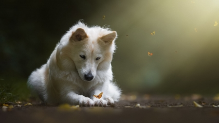 Dog and Butterflies