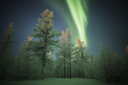 Aurora - amazing, tree, winter, aurora