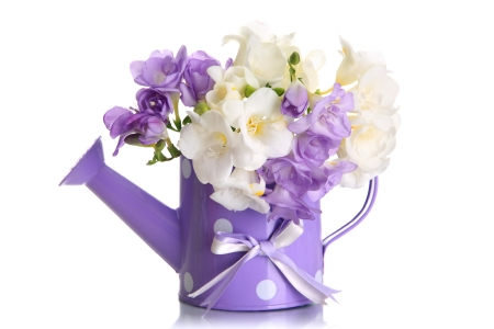 Happy spring! - freesia, purple, flower, spring, lila, white, pink
