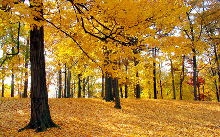 trees - widescreen, autumn, trees