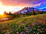Mountain meadow at sunrise