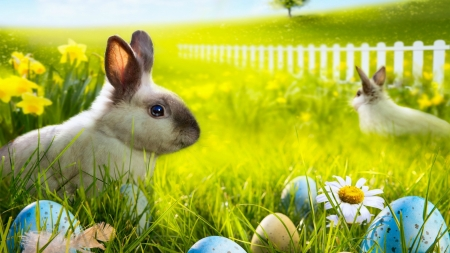 Easter Bunnies - fence, rabbit, grass, holiday, daffodils, Easter, tree, feather, eggs, rabbits, flowers, bunny, Spring, bunnies, hill, daisy