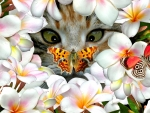 Kitten,Butterflies and Plumeria