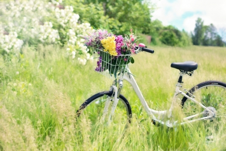 Spring Bike Ride! - flowers, nature, spring, bike
