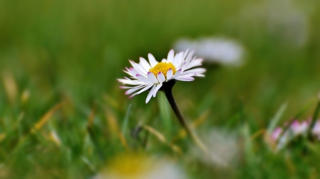 Meadow - nature, spring, grass, daisy
