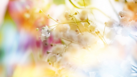 Spring Soft - soft, spring, delicate, floral, tree, summer, blossoms, flowers, pastel, blooms