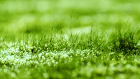 Grass - grass, green, spring, nature