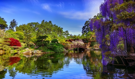 Bridge in spring park - greenery, beautiful, spring, park, trees, lake, freshness, wisteria, pond, serenity, bridge, mirror, river, reflection, branches, tranquility