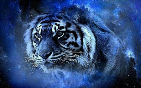 Mystical Tiger 3d And Cg Abstract Background Wallpapers